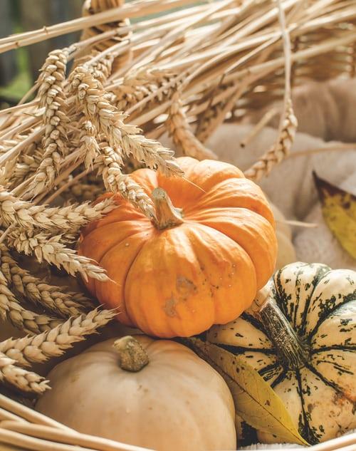 pumpkin a healthy food