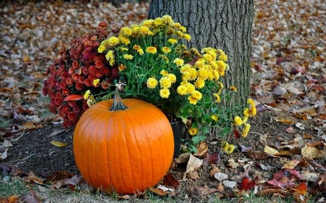 Pumpkin Recipes to combat COVID|Immunity Booster Series